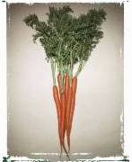 Orange_Carrots