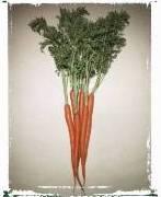 Orange_Carrots