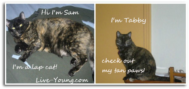 sam-tabby-cats-live-young